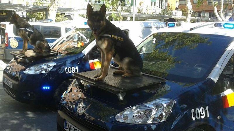El Pastor Alemán, el perro policía por excelencia